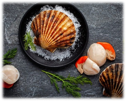 King Scallops from Norway
